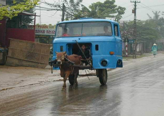 animal-vietnamese-ox-truck1